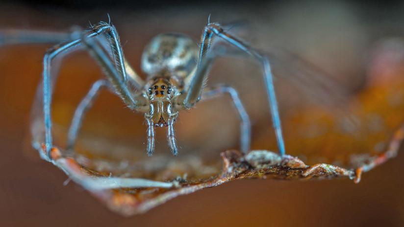 Horror en la Red: Un presentador de TV encuentra arañas gigantes en su cocina (FOTO)