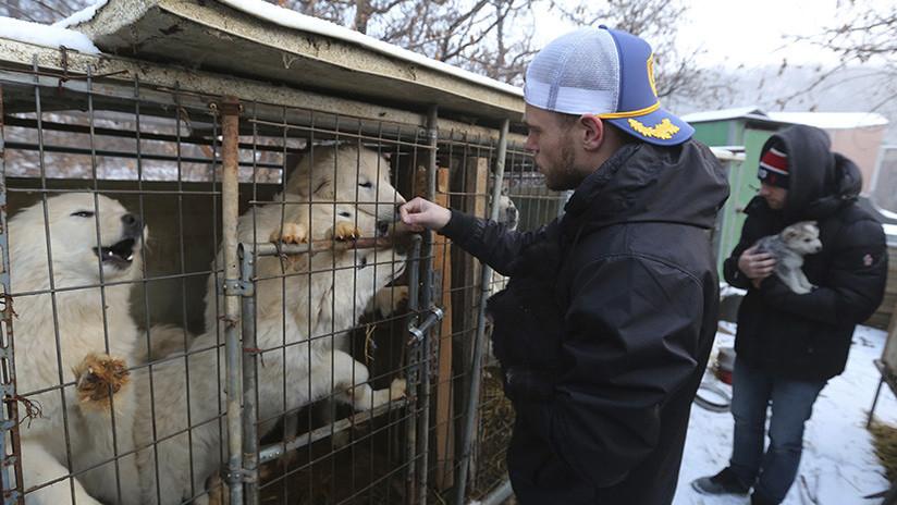Un esquiador estadounidense rescata un perro que iba a convertirse en comida humana en Corea del Sur