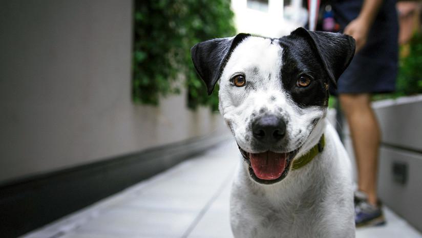 VIDEO: El sorprendente caso de la perra que espera el mismo tren todas las noches