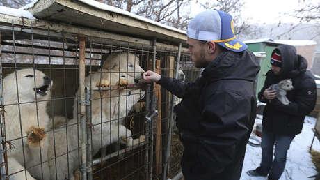 El esquiador de freestyle Gus Kenworthy, en una granja de cría de perros para fines alimentarios en Siheung (Corea del Sur), el 23 de febrero de 2018.