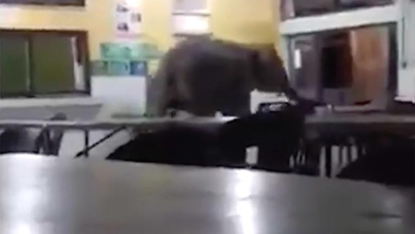 Un elefante irrumpe en una escuela y crea pánico en Malasia (FOTOS, VIDEO)