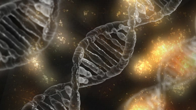 Crean el mayor árbol genealógico del mundo: Así se une a 13 millones de personas de 11 generaciones