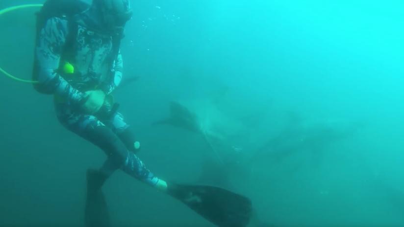 VIDEO: Escalofriante momento en que un tiburón ataca y hiere a un buceador