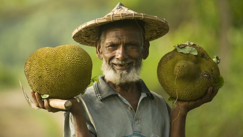 ¿Una solución para el hambre en el mundo? La 'fruta de los pobres' que podría salvar a millones