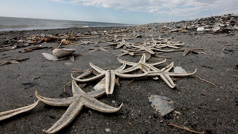 """FOTOS, VIDEO: Un """"Armagedón"""" de estrellas marinas se desató en una playa de Reino Unido"""