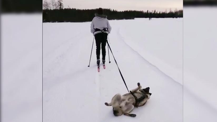 """VIDEO: Un perro """"desmotivado"""" causa furor en la Red"""