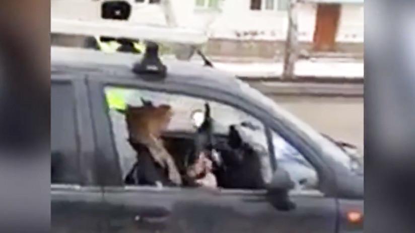 VIDEO CHOCANTE: Una rusa ebria destroza su coche con un hacha en presencia de su niño