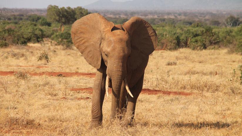 La Administración Trump levanta la prohibición a la importación de trofeos de caza africanos