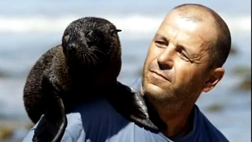 Uruguay: Encuentra dos cachorros huérfanos de lobo marino y lo adoptan como padre (VIDEO)