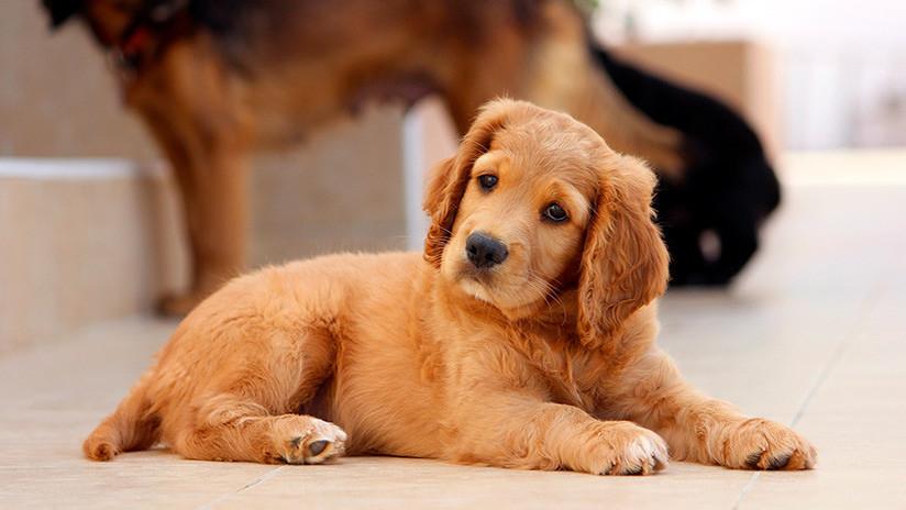 FOTO: Perro con cara de humano causa furor en la Red