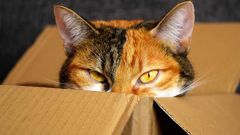 """""""El gato que se creía leña"""": La tierna historia de una niña y su mascota conmueve a internautas"""