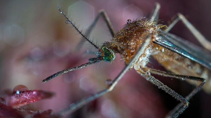 El zika y el dengue regresan a Paraguay