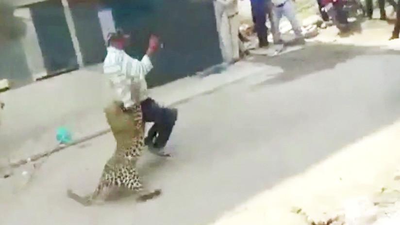 VIDEO: Un leopardo salvaje desata el pánico en las calles de una ciudad india