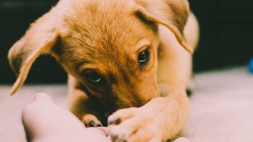 FOTOS: Los asombrosos parecidos del 'perro con cara humana' con las celebridades