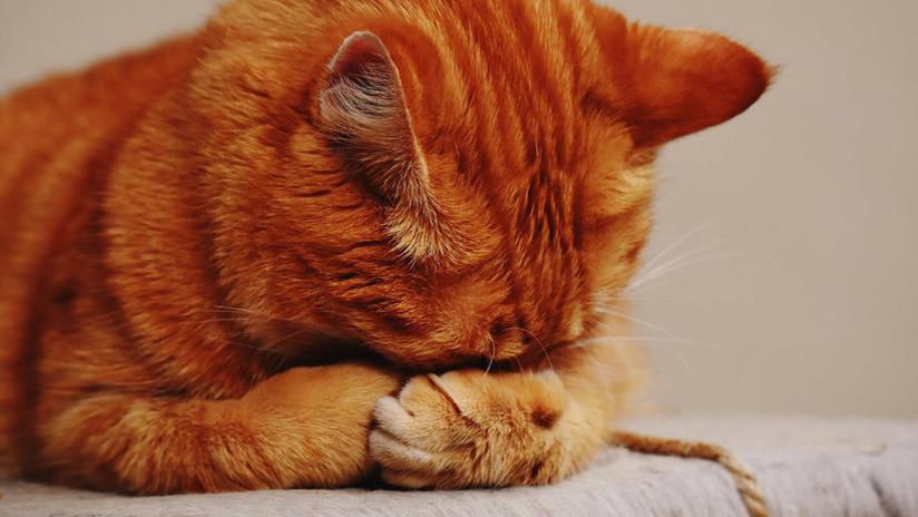 Rompiendo estereotipos: los gatos también saben amar