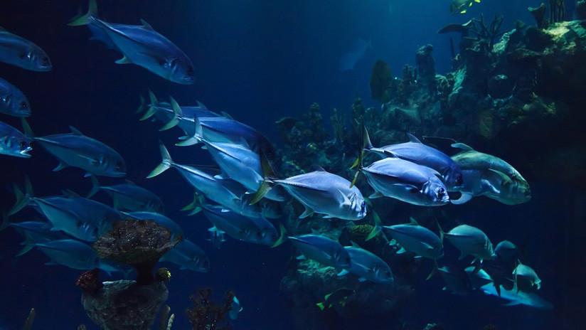 Hallan 15 cerebros fosilizados de una extraña criatura marina de hace más de 520 millones de años