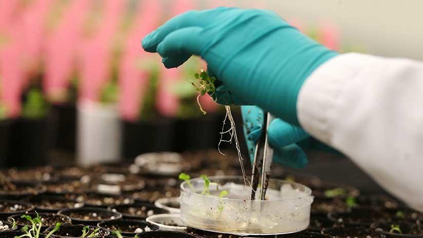 Monsanto está detrás de una compañía de 'edición genética' en EE.UU.