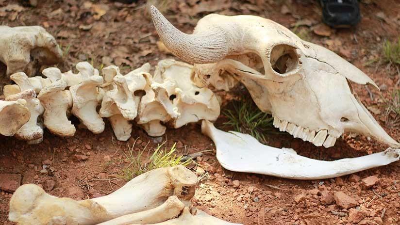 Revelan por qué los mayas empezaron a criar animales hace 2.500 años