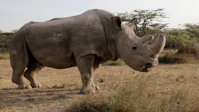 Estos son los 7 animales que no volveremos a ver (y la culpa es nuestra)