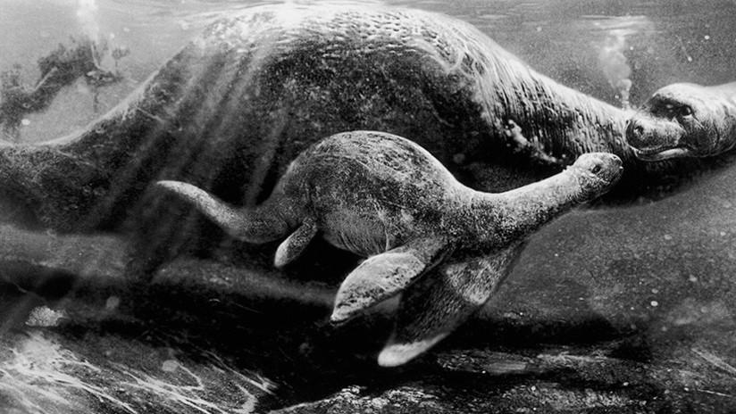 Aparece (y luego desaparece) una extraña criatura en la costa este de EE.UU.