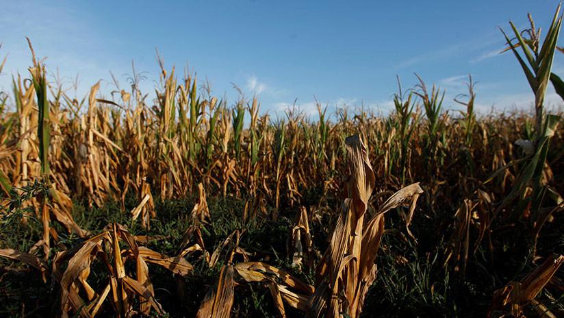 La sequía en Argentina podría 'evaporar' el 0,5% del PIB