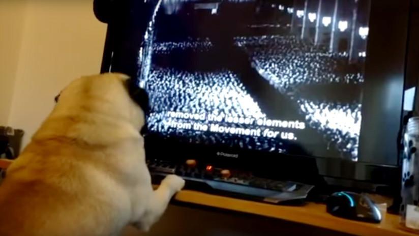 VIDEO: Le enseña al perro de su novia un saludo nazi y ahora podría ir preso