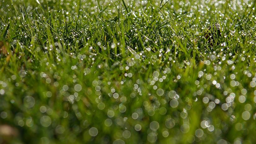 FOTO: Entrenador de fútbol protege de la lluvia a sus jóvenes pupilos en España