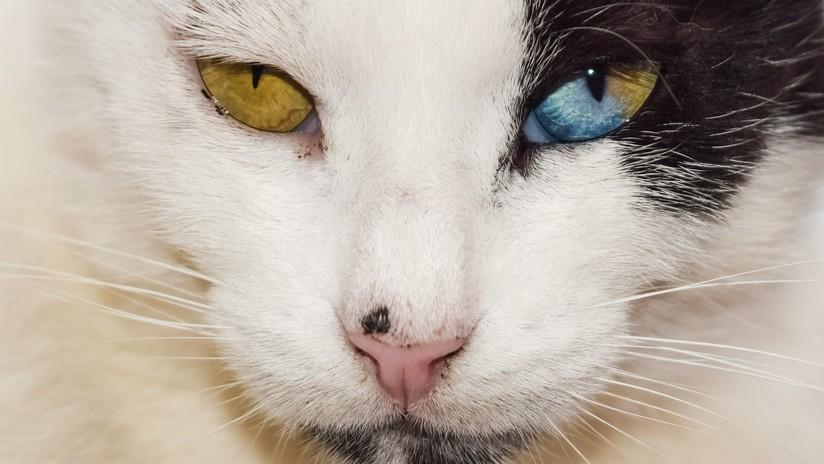 FOTOS: La amistad de un niño y un gato con idénticos problemas físicos se vuelve viral