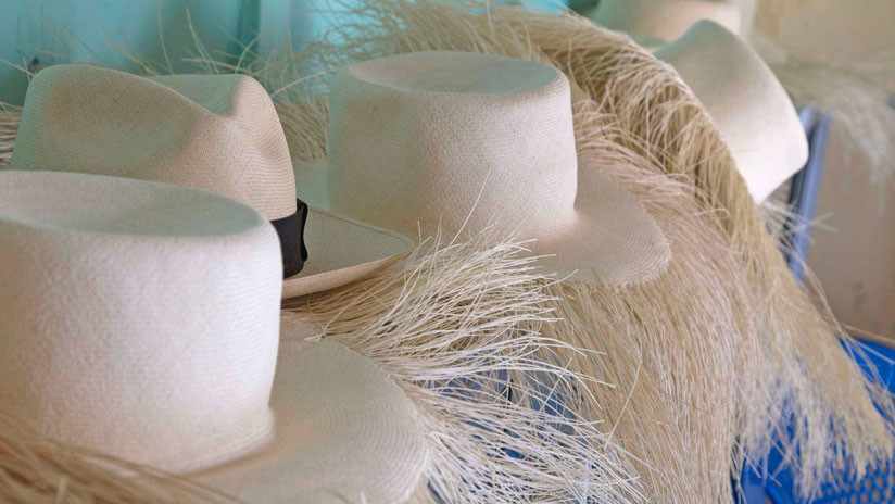 Sombreros de paja toquilla de Manabí son destacados por agencia ... 43ec78794a6