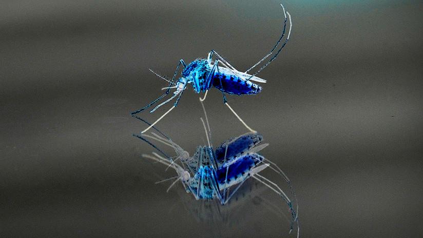 Crean un radar para salvar al mundo de los mosquitos asesinos