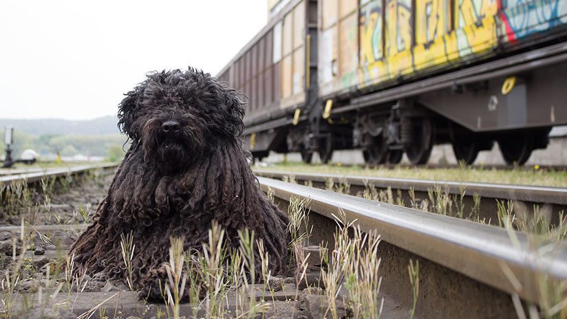 FOTO: Rescatan a un perro que cayó a las vías del Metro de la Ciudad de México