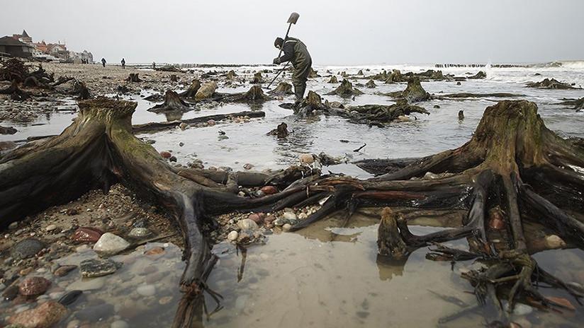 FOTOS: Emerge un bosque fantasma de las aguas del mar Báltico ruso