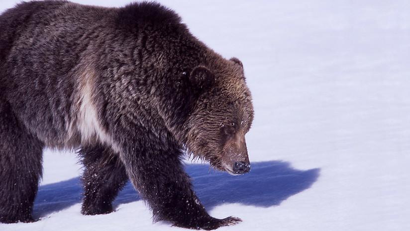 VIDEO: Unos pescadores rusos persiguen en motos de nieve a un oso en las islas Kuriles