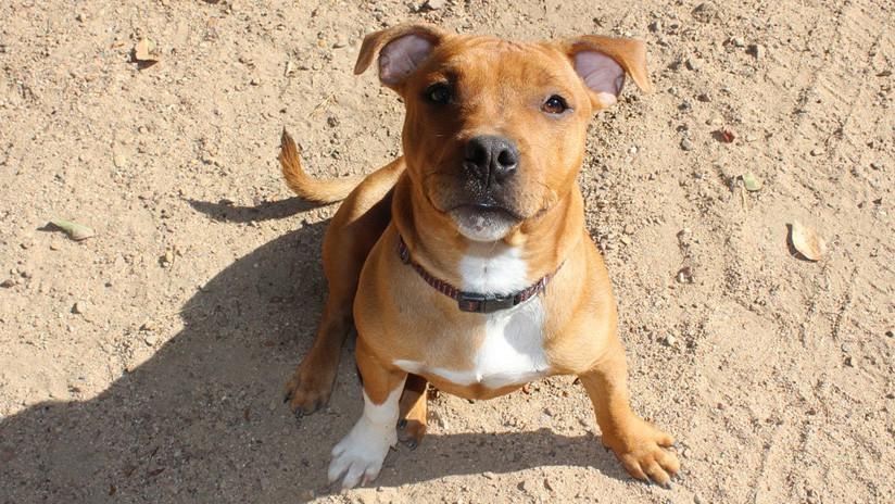 Cientos de miles de alemanes firman una petición y salvan al perro que mató a sus dueños