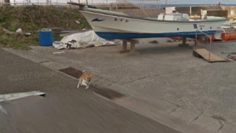 Google Street View 'inmortaliza' a un perro que protagonizó una persecución viral en Japón