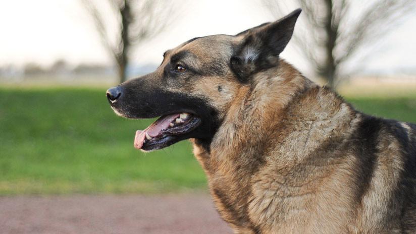 Un juez ordena la detención de un perro prófugo en Argentina