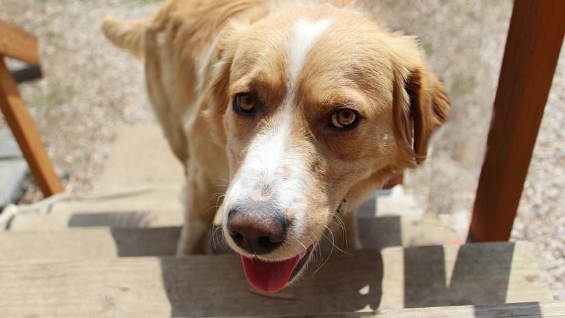 """""""Se busca un abogado"""": 'Arrestan' a un perro y su expresión se vuelve viral (FOTO)"""