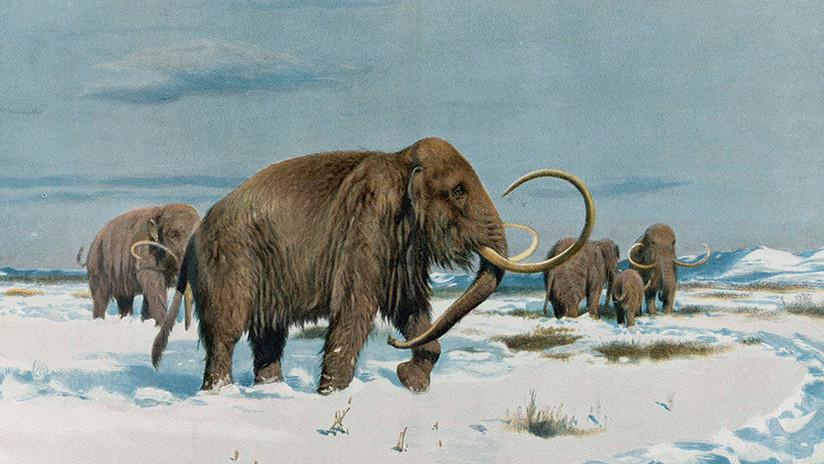 Un proyecto científico planea que los mamuts vuelvan a poblar la Tierra