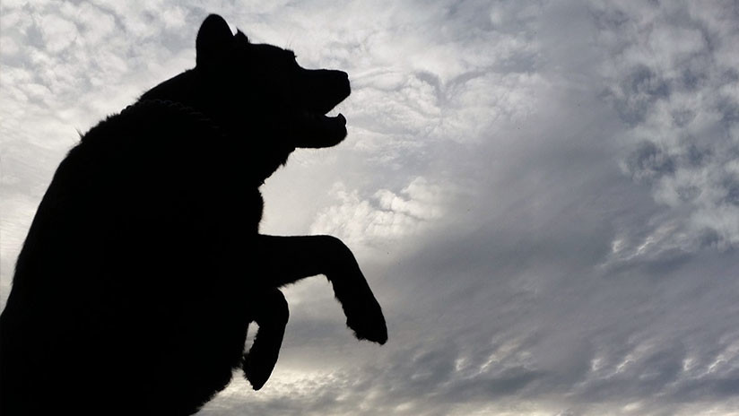 FOTO: Extraña criatura mata a dos perros y causa terror en Argentina