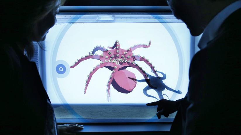 Flexibles y ágiles: EE.UU. desarrolla 'robots calamares' para áreas de acceso restringido