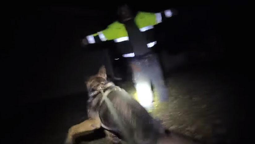 VIDEO: Un estadounidense muerde dos veces al perro del policía que acudió a detenerlo