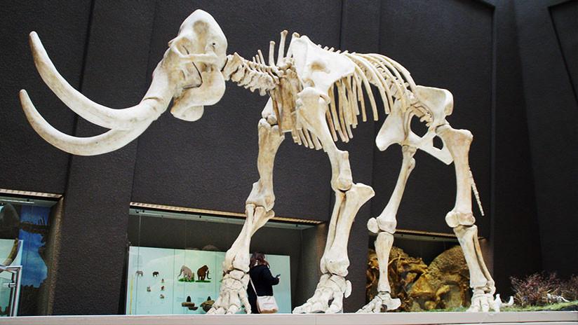Vaticinio científico: La vaca, ¿el mamífero más grande de nuestro planeta?