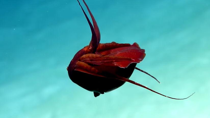 "VIDEO: Descubren una ""extraña"" criatura en el golfo de México"