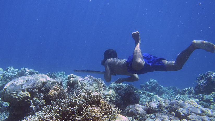 Descubren el secreto de las capacidades extraordinarias de los 'gitanos del mar'