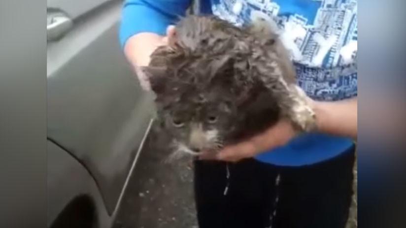 VIDEO: Una gata viajera recorre más de 100 kilómetros por Rusia debajo de un auto
