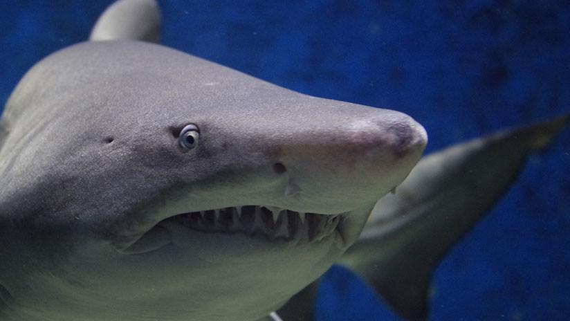 Lo atacó un tiburón, un oso y una serpiente en menos de cuatro años (y vive para contarlo)