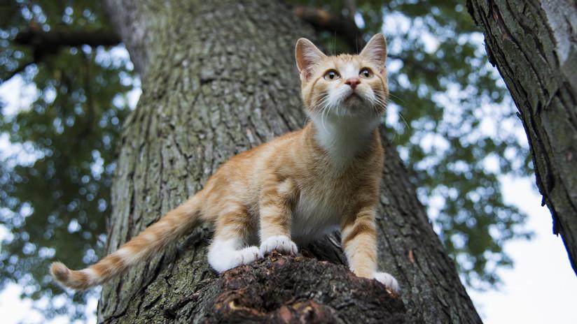 FOTOS: Los bomberos salvan a un 'héroe' atrapado en un árbol por rescatar un gato