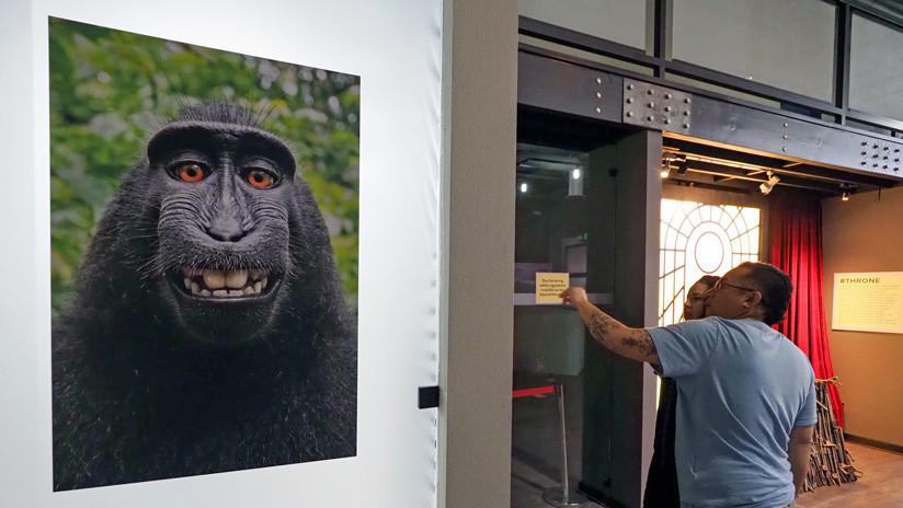 Se acabó: El macaco que dejó en la ruina a un fotógrafo no puede reclamar derechos por sus fotos
