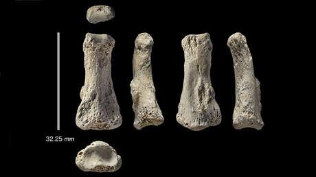 Falange fosilizada del dedo medio de un Homo sapiens, encontrada en la excavación arqueológica Al Wusta, Arabia Saudita.