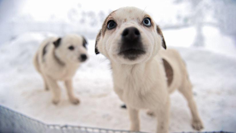 Los inesperados beneficios de tener mascotas en la gran ciudad